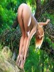 Рыжая дама в зеленом лесу обнаженная на дереве, фото 15
