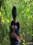 Зрелая шлюшка в лесочке оголяет большую задницу и дойки, фото 20
